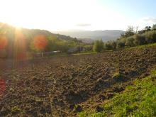 IMU terreni agricoli: Vicchio torna esente.